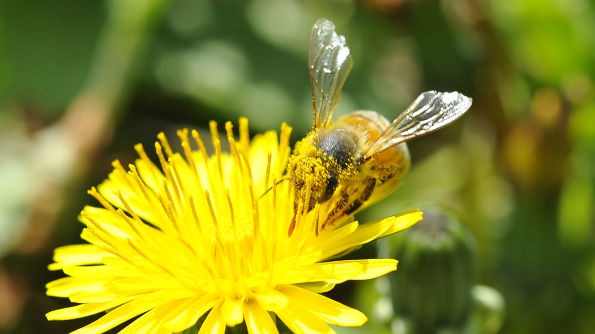 api-sentinelle-articolo